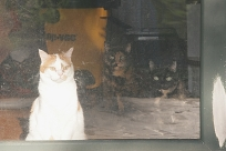 3 cats watching me work outside.