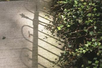 shadow & vine sm