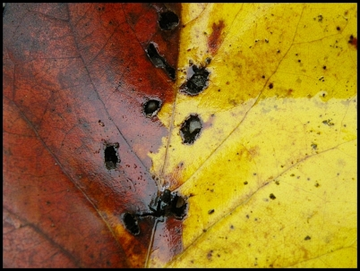 leaves039close