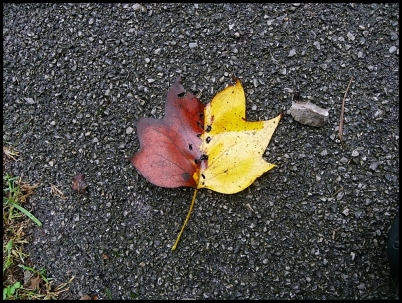 leaves041far