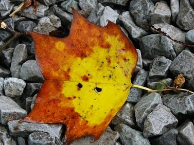 leaves004
