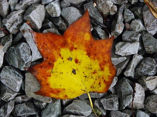 leaves016