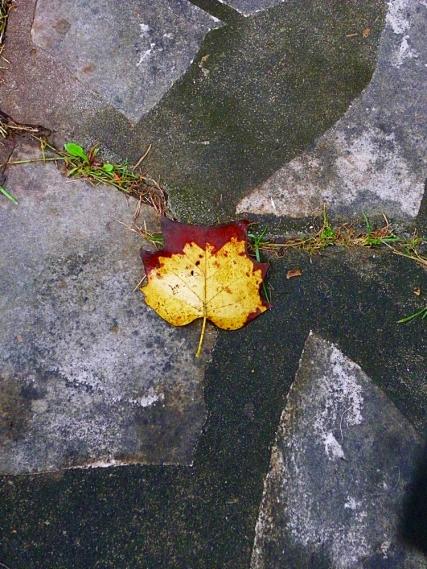 leaves035