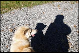 Walking dog, shadow