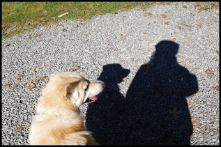 Walking dog, shadow