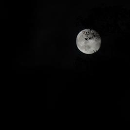 moon trees2