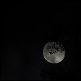 moon trees3