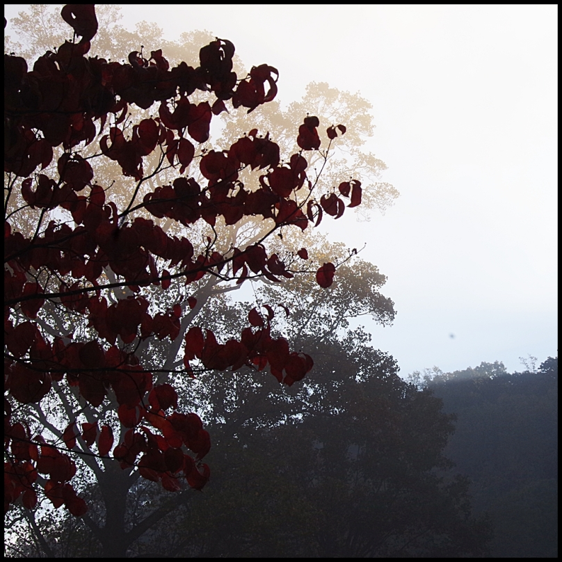 red tree2