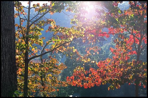 sunny trees