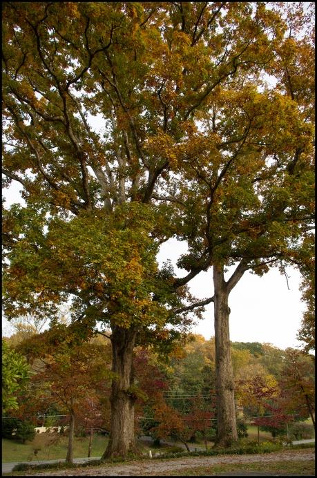 double oak
