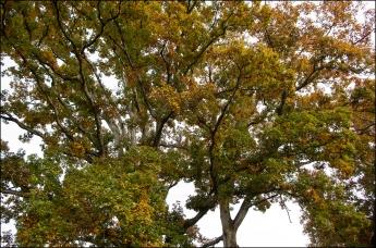 oak 2_SM