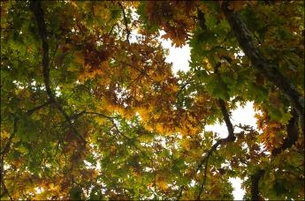 oak 3_SM