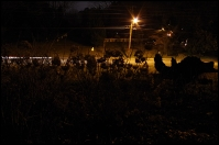 night road light sm