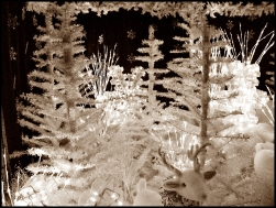 Sepia Christmas Decor