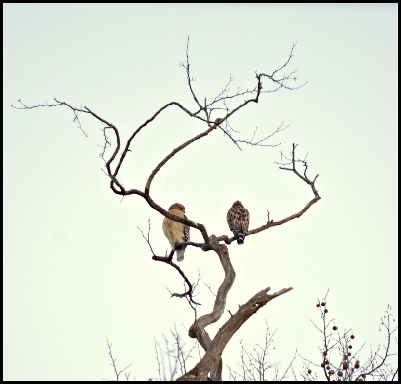 love birds sm