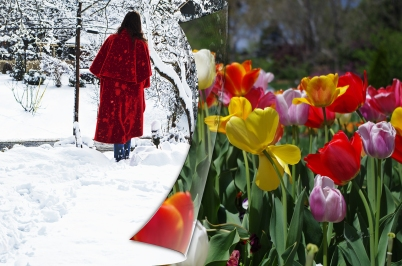 walking away snow 6830 tulips page sm
