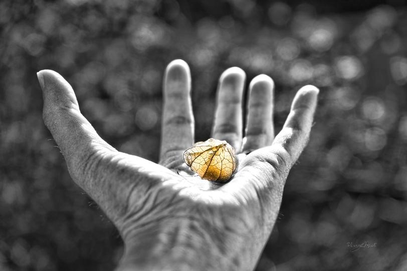 Tiny Lantern in Hand