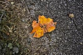Orange leaf on asphalt