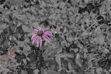 chrome-daisy0993sm1
